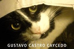 gatos_y_perros_baja